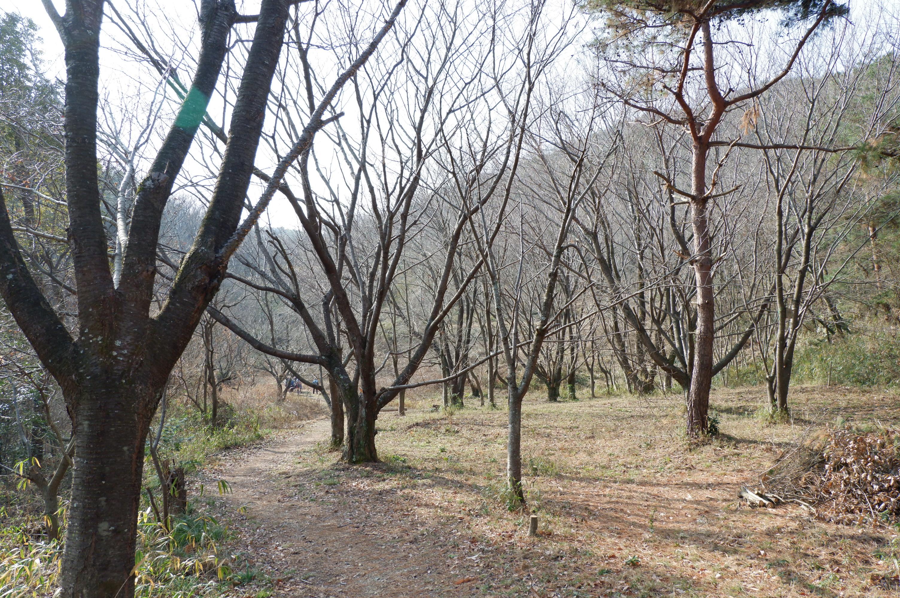 宝塚市,きずきの森。