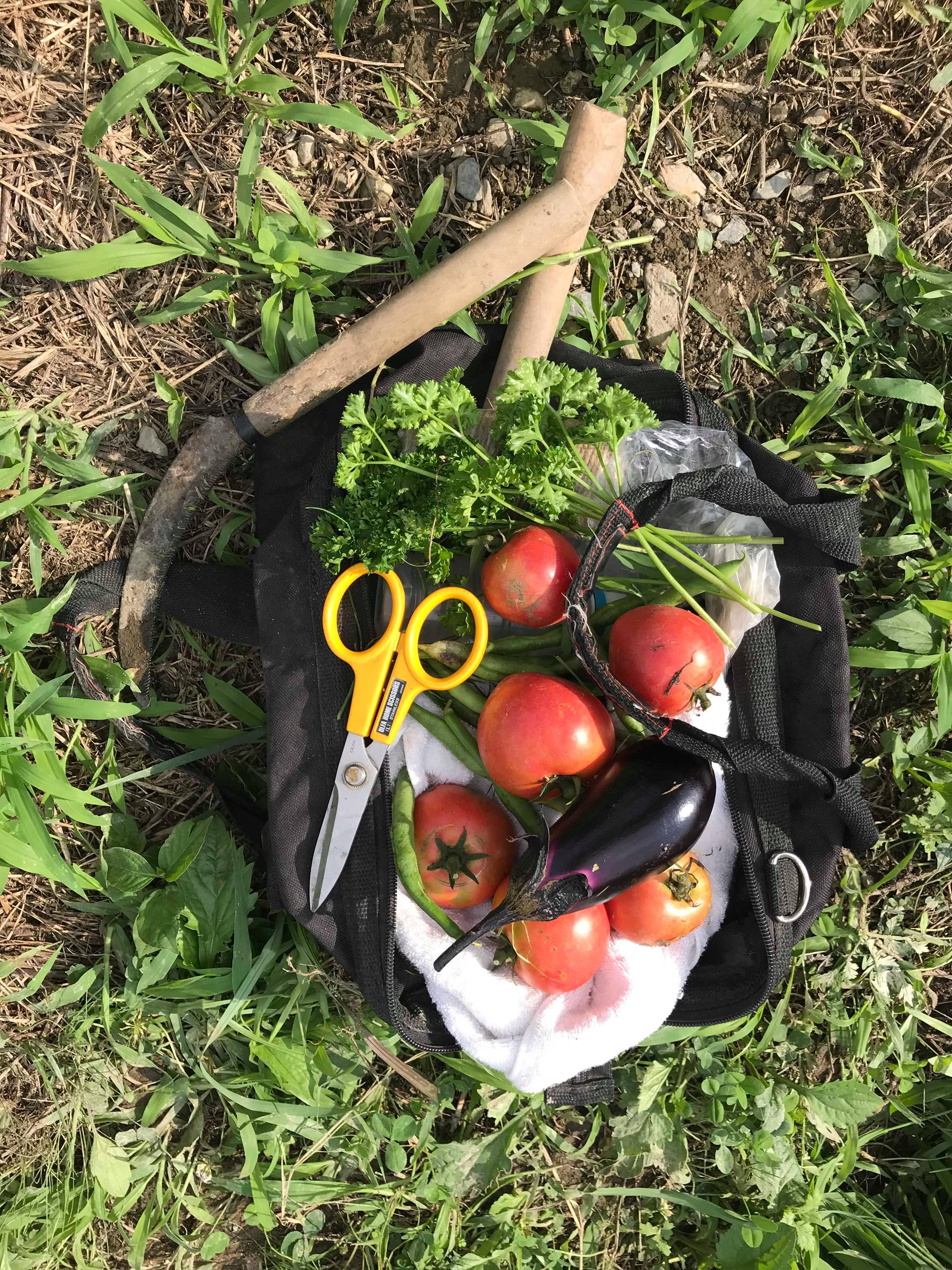 川西市,無農薬野菜,マーケット,マルシェ